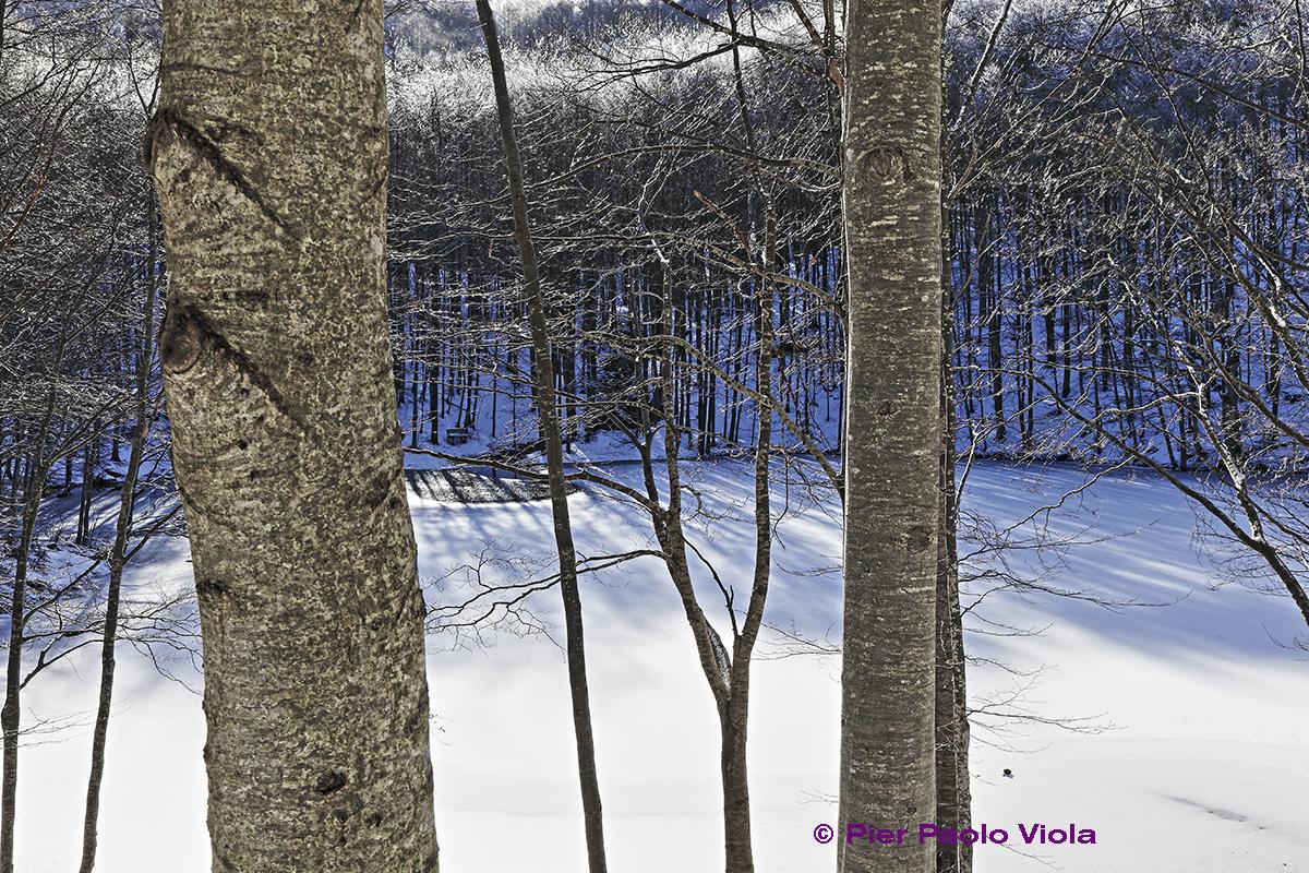 Viola-paesaggio 3